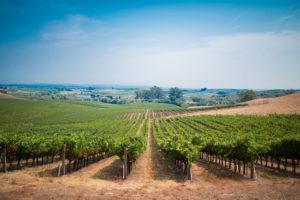 vinícolas gaúchas